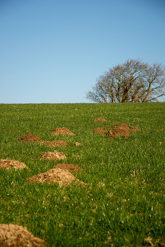 6 Incredibly Useful Ways to Stop Making Mountains out of Molehills
